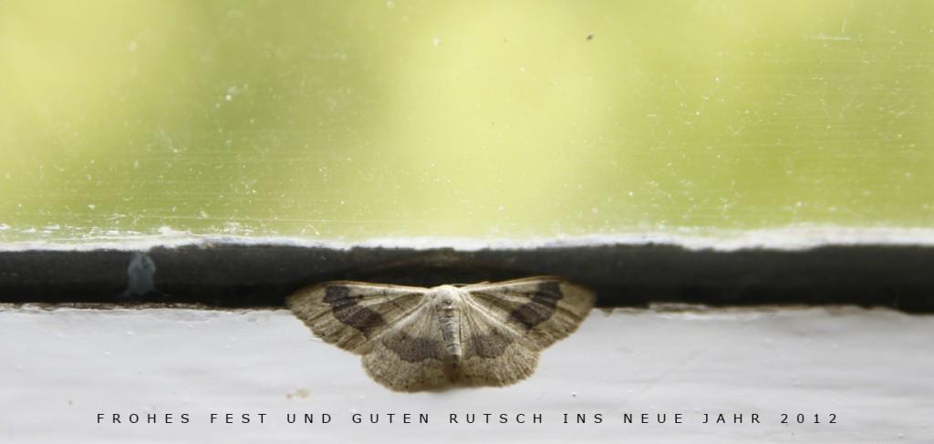 Weihnachtskarte HS2011