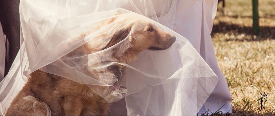 Eine freie Trauung mit Babybauch & Hund im Kleid